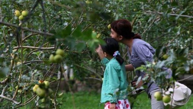 Tips Wisata Petik Apel